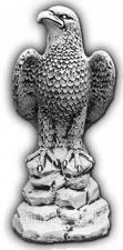 Орел правый — С 135