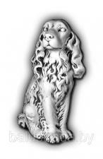 Собака — С 157